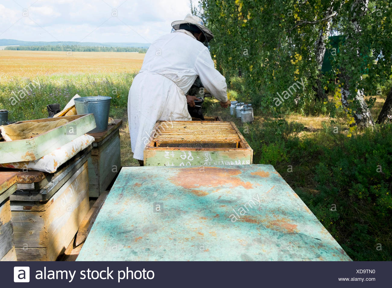Male beekeeper monitoring apiary in field - Stock Image