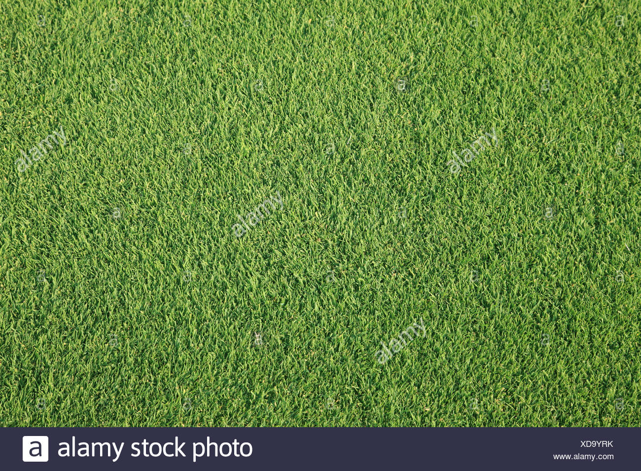 grass on golf course - Stock Image