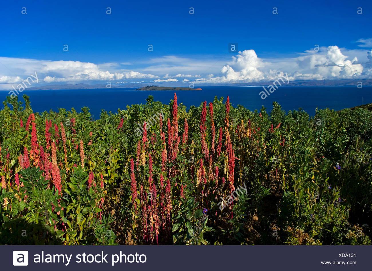 south america peru bolivia firmament sky salt water sea ocean water scenery - Stock Image