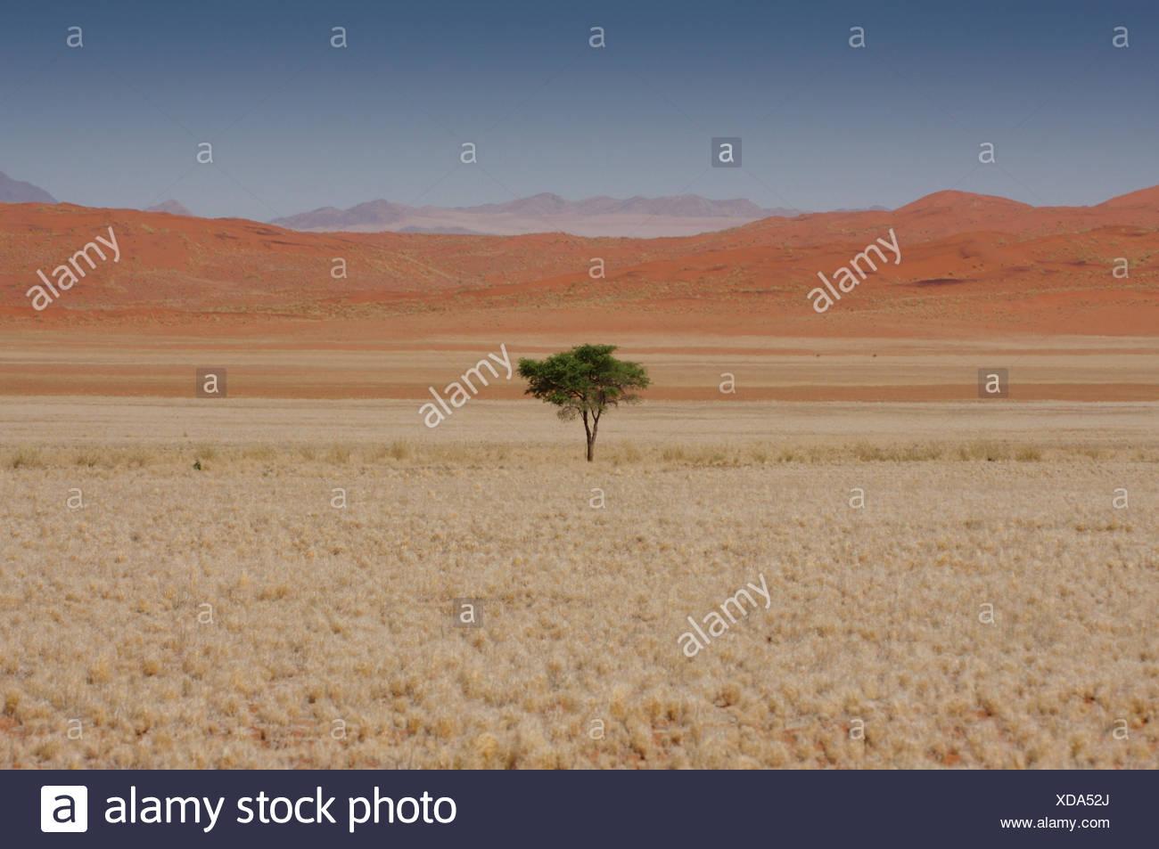 tree desert wasteland - Stock Image