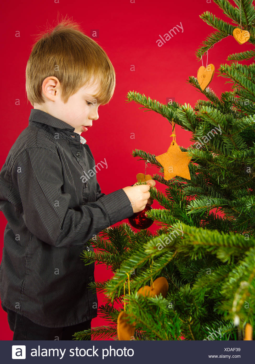 Boy hanging Christmas tree decorations - Stock Image
