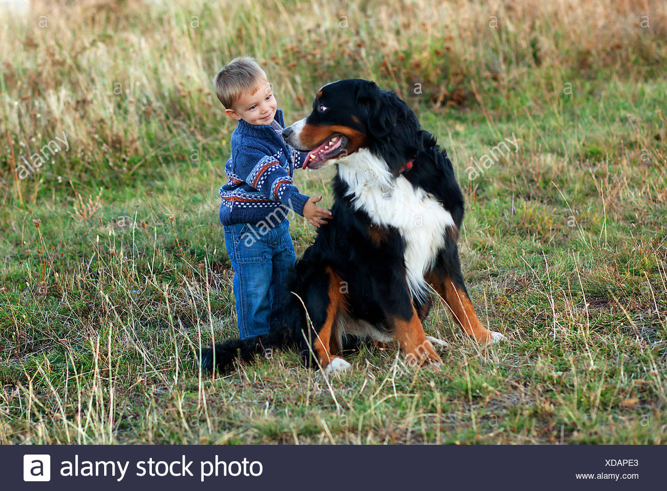 Toddler boy (18-23 months) with big dog - Stock Image
