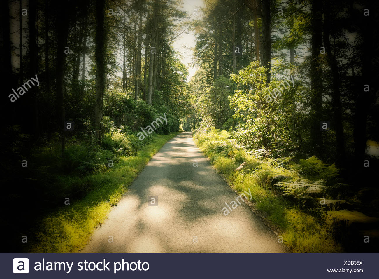 Country rural road forest sunlight vanishing point - Stock Image