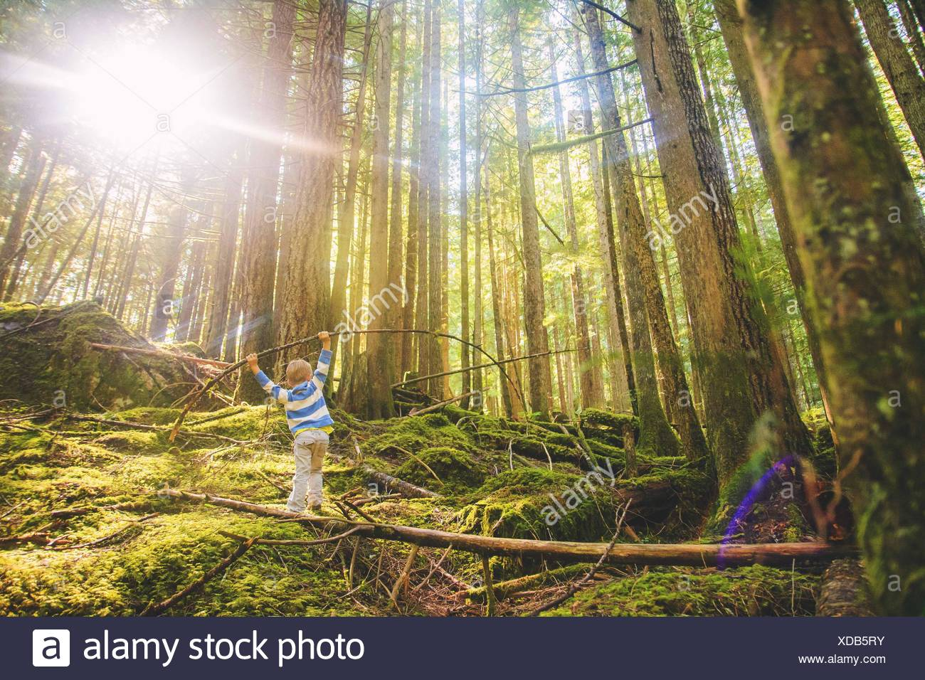 Young boy (4-5) balancing on log in forest - Stock Image