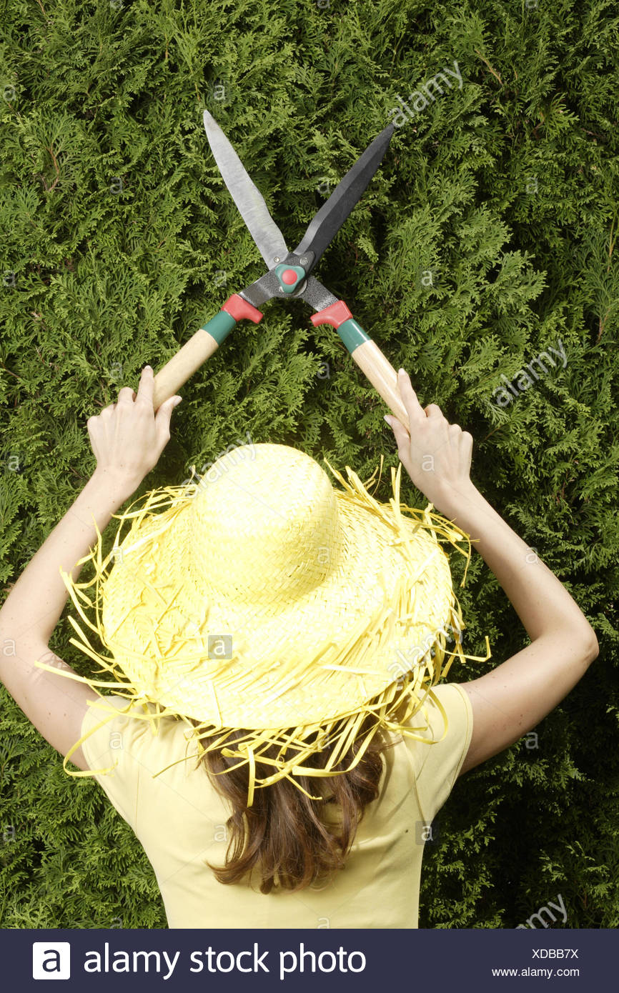Woman, young, straw hat, hedge, cut, hedge-trimmer, back view, - Stock Image