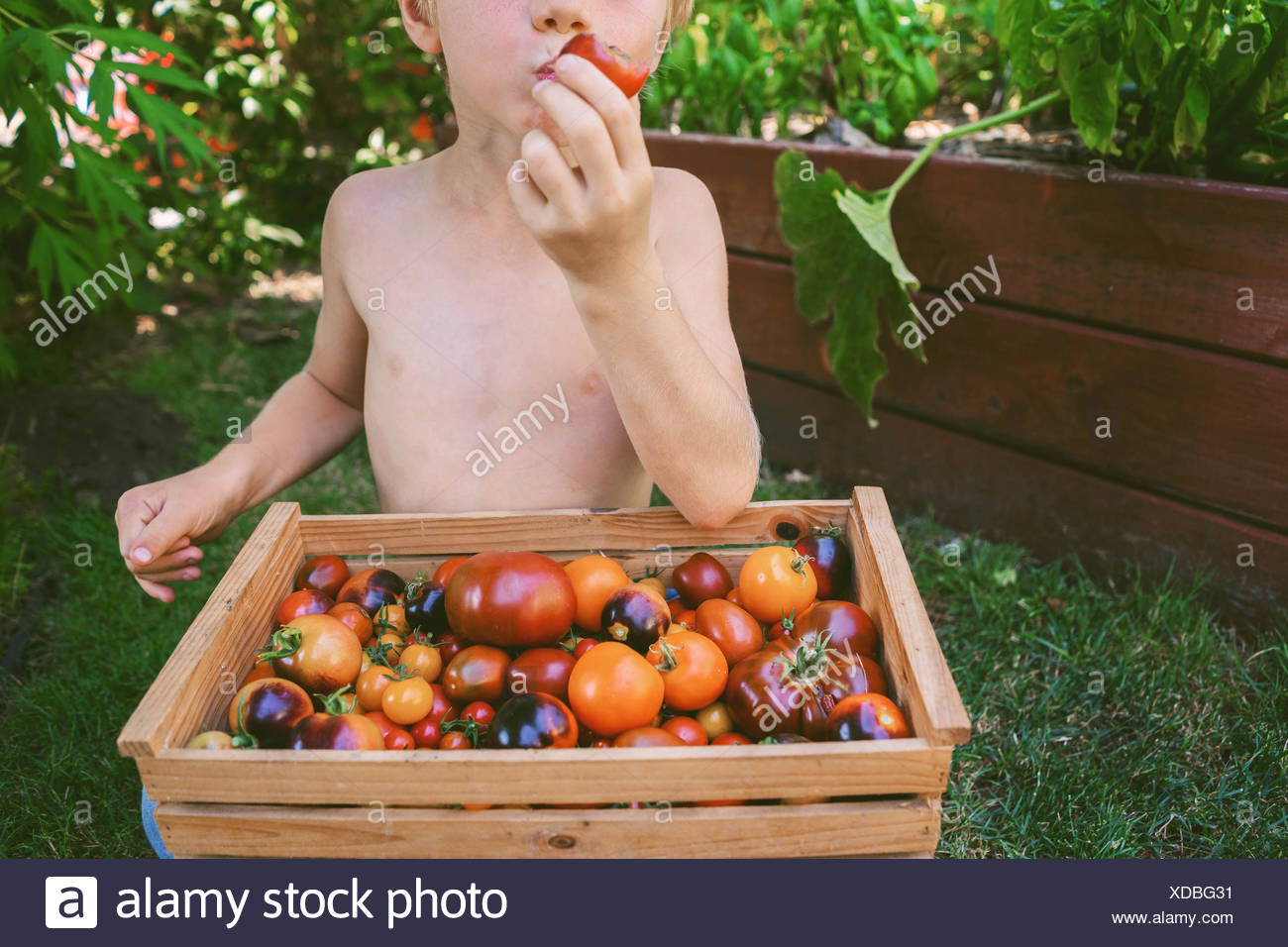 Close-up of a boy eating a freshly picked tomato - Stock Image