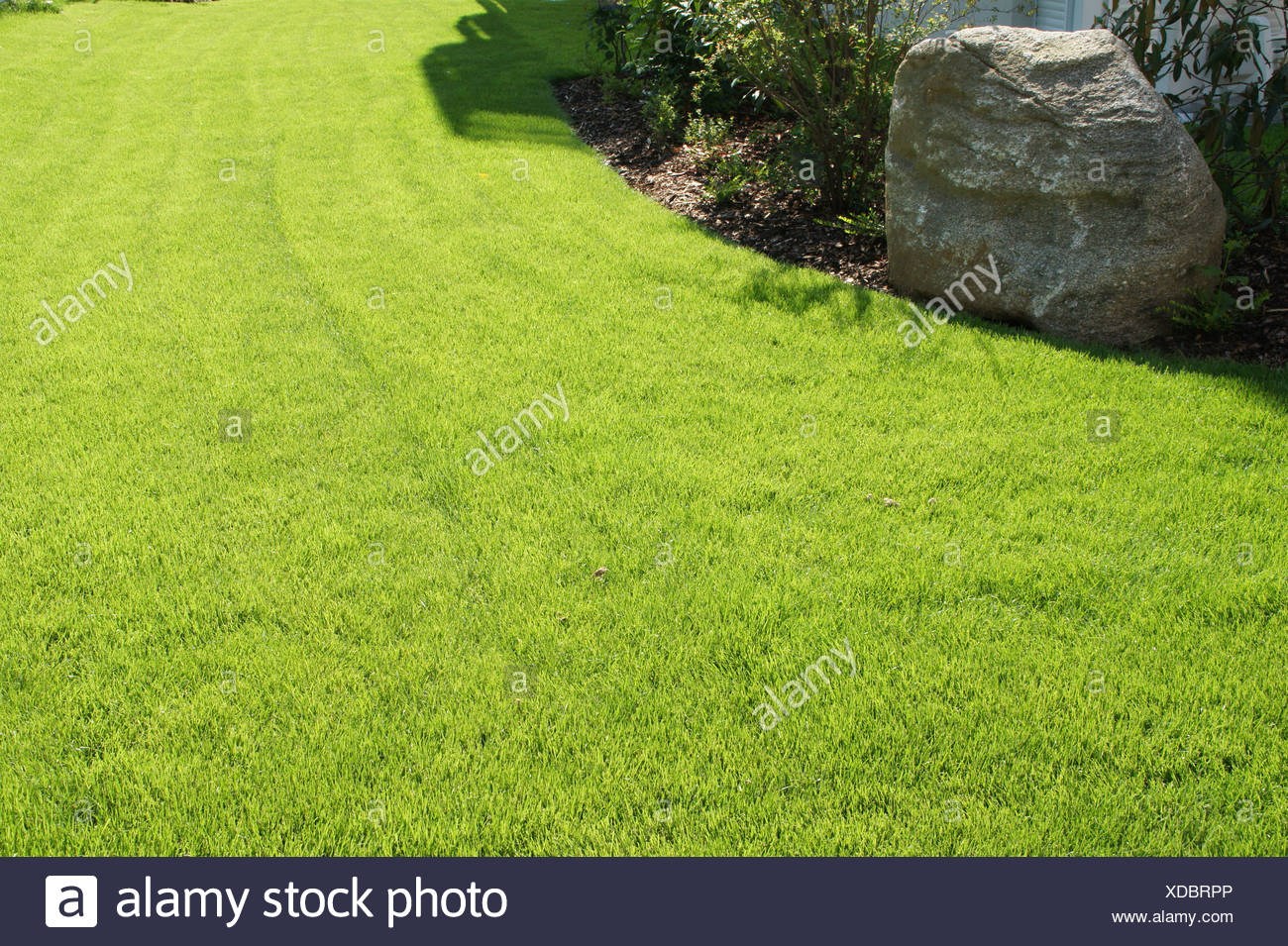 Rolled Sod - Stock Image