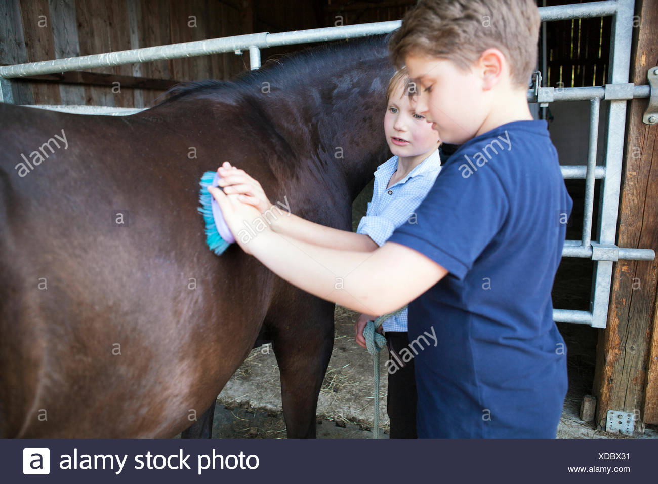 Two boys grooming horse in stable - Stock Image