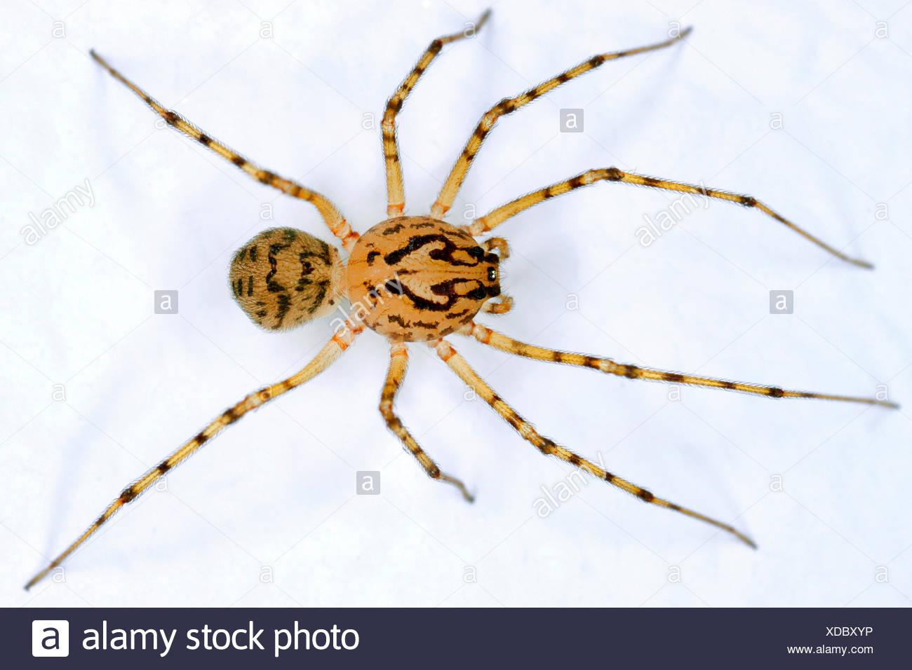 Berühmt Spinnen Färbung Blatt Zeitgenössisch - Entry Level Resume ...