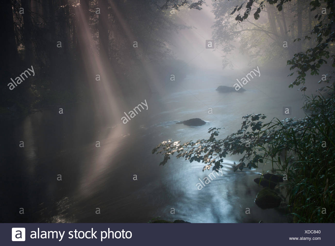 river in a forest in morning damp, Germany, Saxony, Vogtland, Triebtal - Stock Image