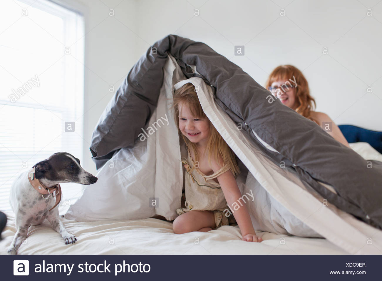 Girl hiding under duvet, mother and dog on bed - Stock Image