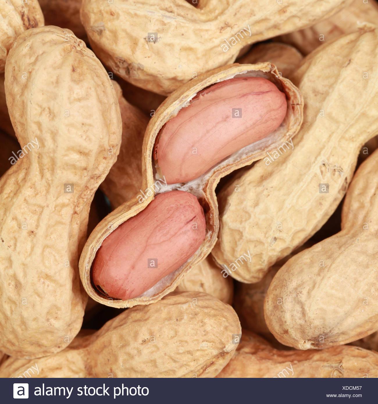 Erdnuss