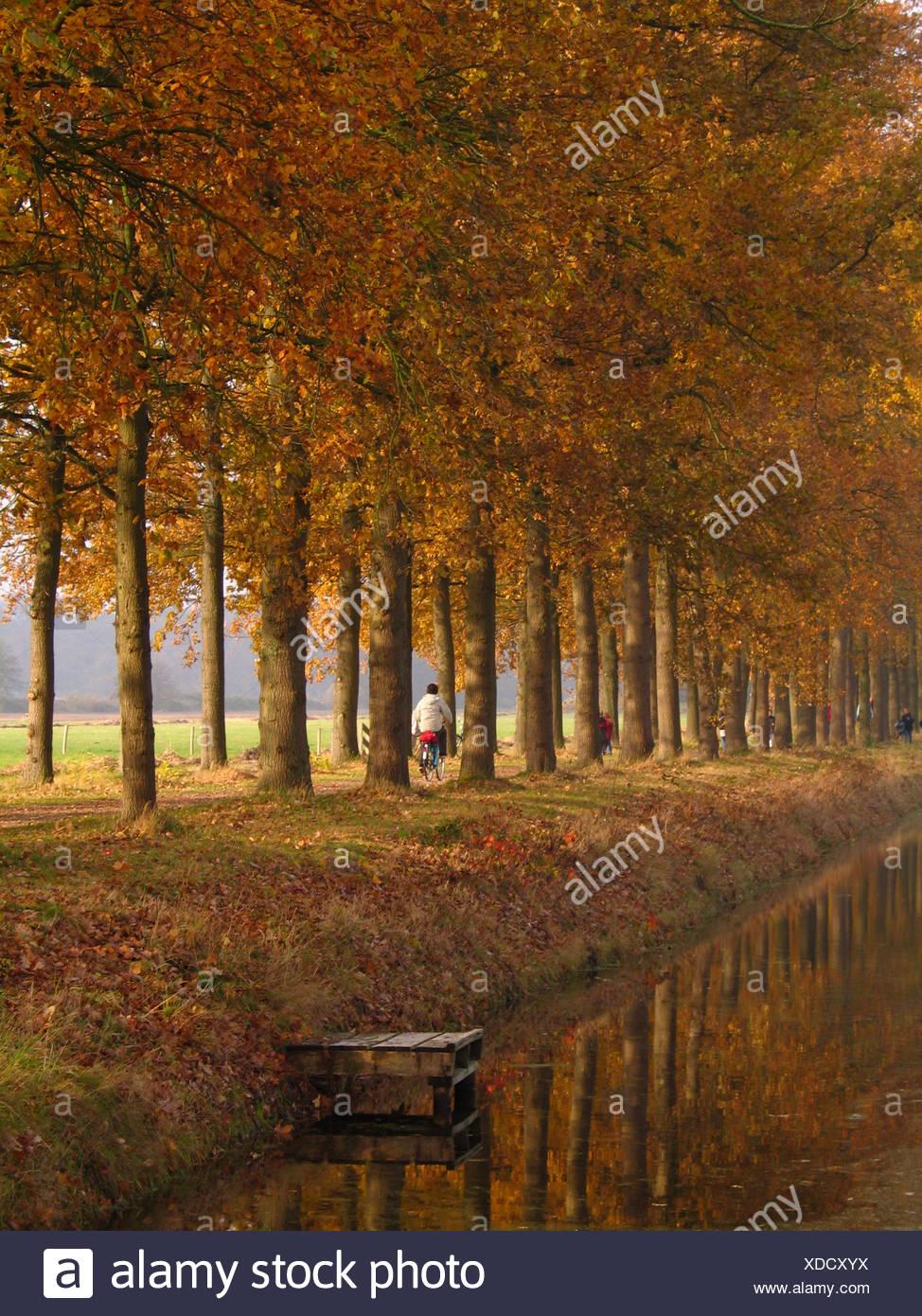 autumn, coloured deciduous trees near s'Graveland (region Gooi between Hilversum and Amsterdam Stock Photo
