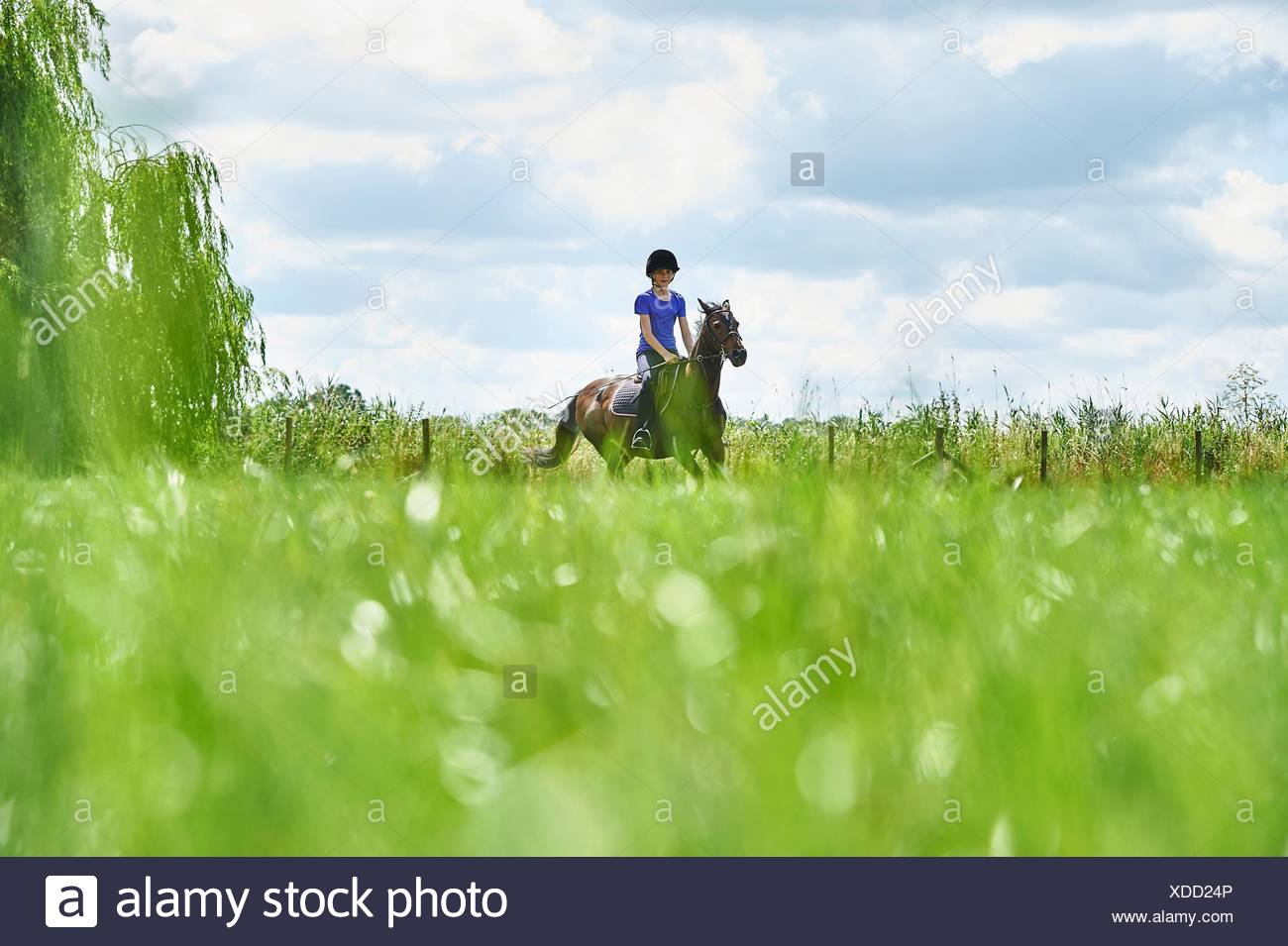 Surface level view of girl horse riding in field - Stock Image