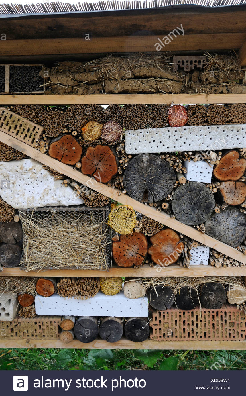 Nesting possibilities for insects - Stock Image