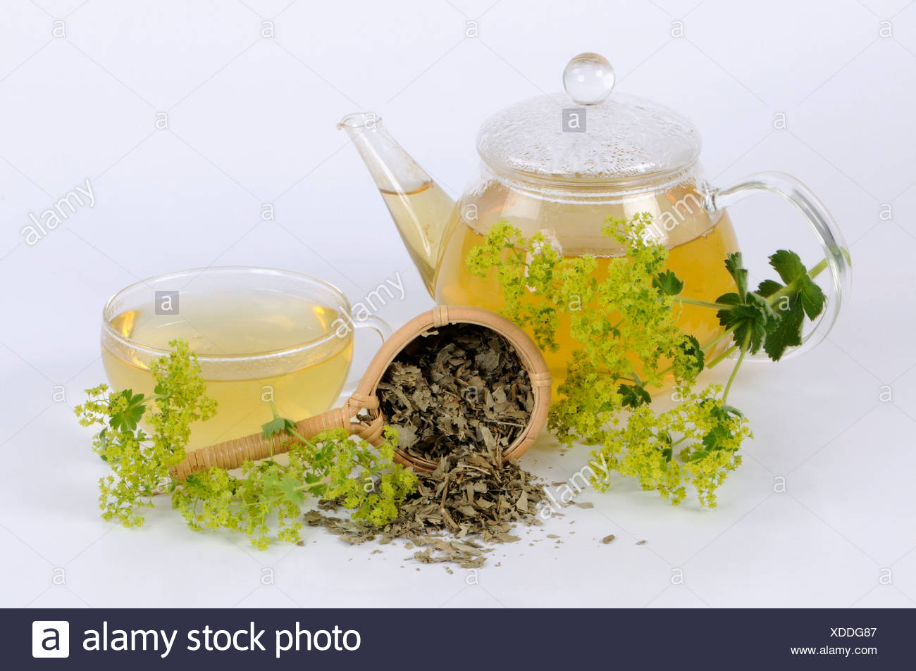 how to make lady mantle tea