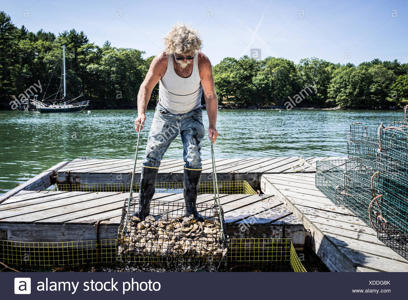 An oyster fisherman hauls a basket of oysters up from a holding pen in the river. Stock Photo