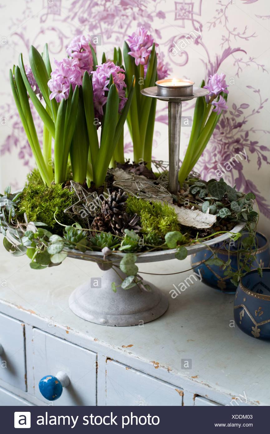 Hyacinth in a flower arrangement Sweden - Stock Image
