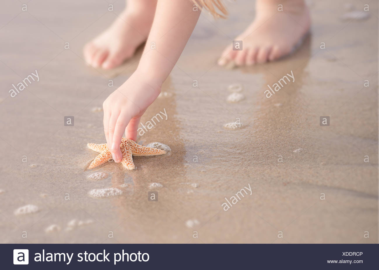 Close-up of a girl picking up a starfish - Stock Image