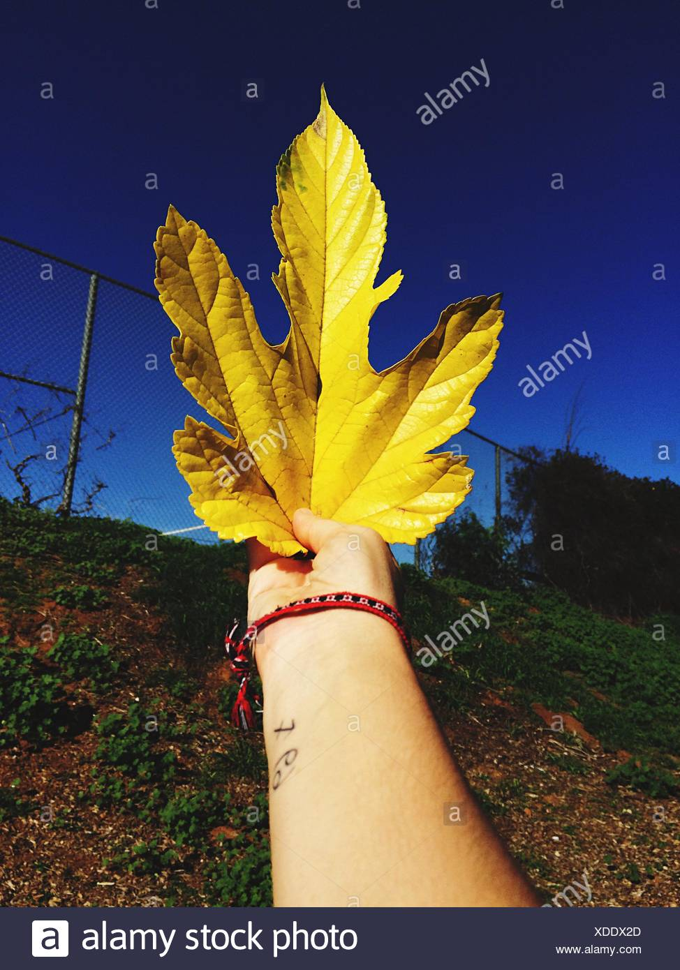 Woman Holding Yellow Leaf In Hand - Stock Image