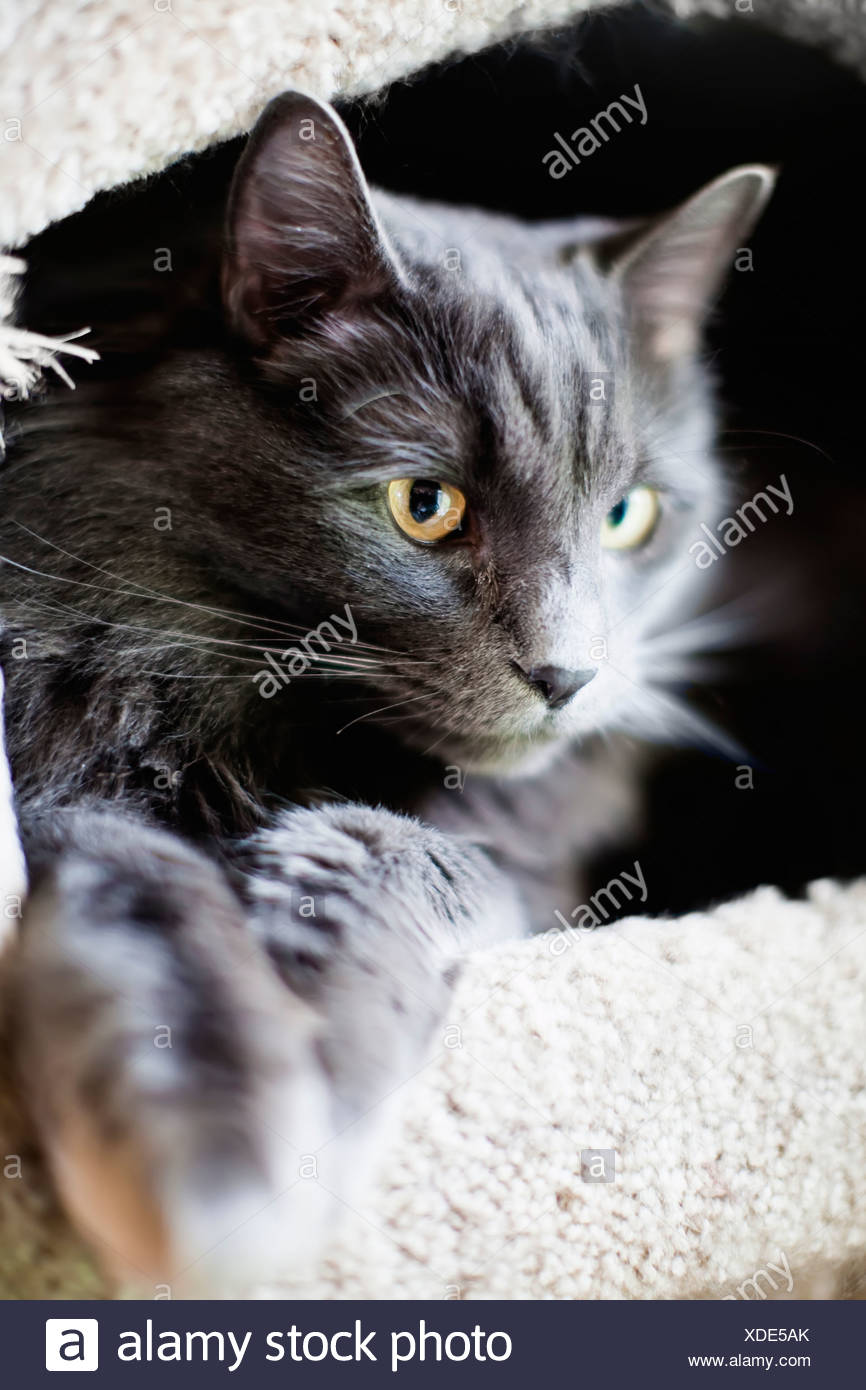 Close-up of a cat sitting in the pet house - Stock Image