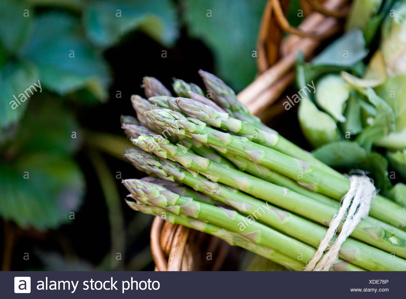 A bunch of asparagus in a basket of fresh vegetables - Stock Image