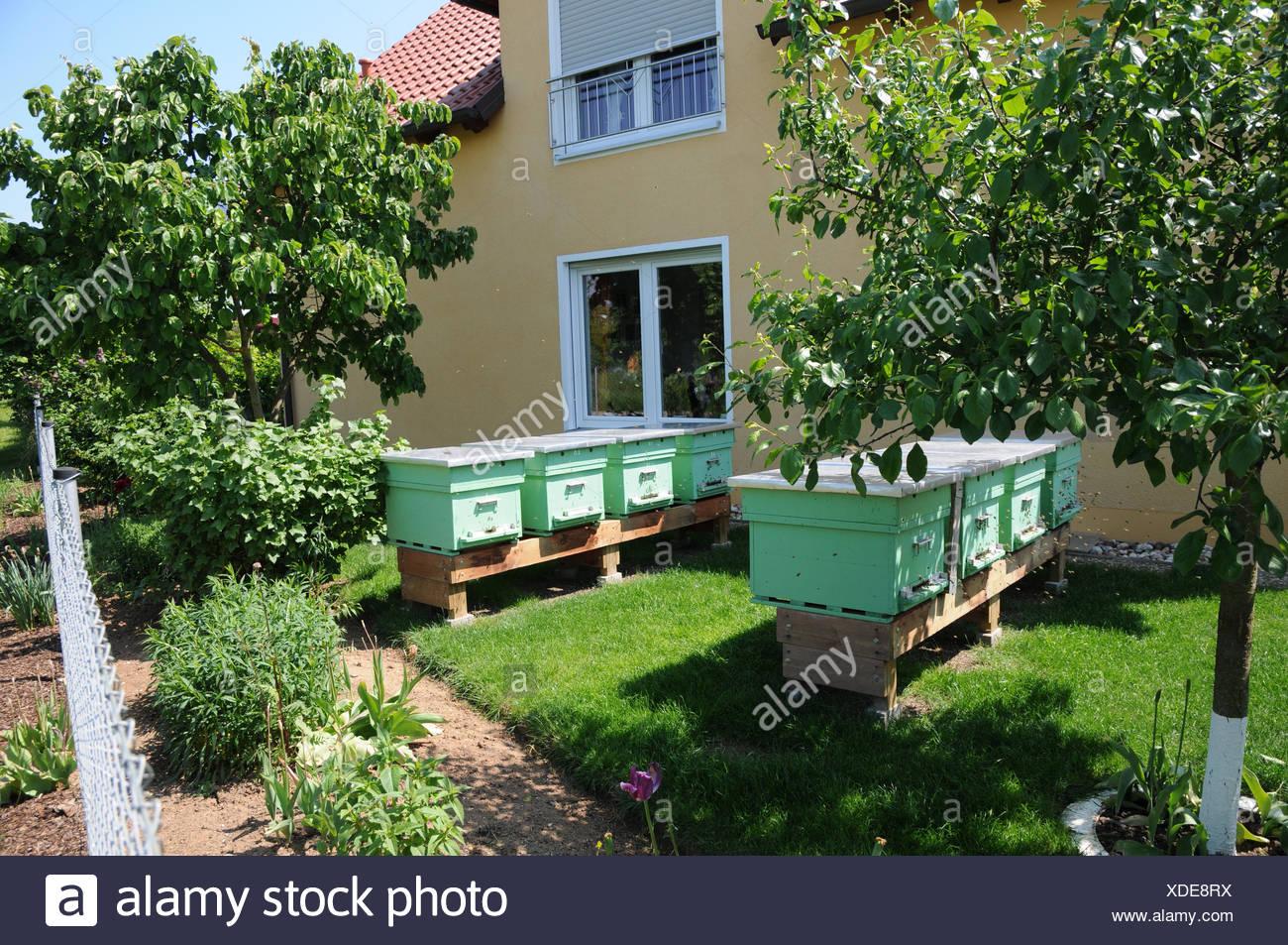 Beehives in garden - Stock Image