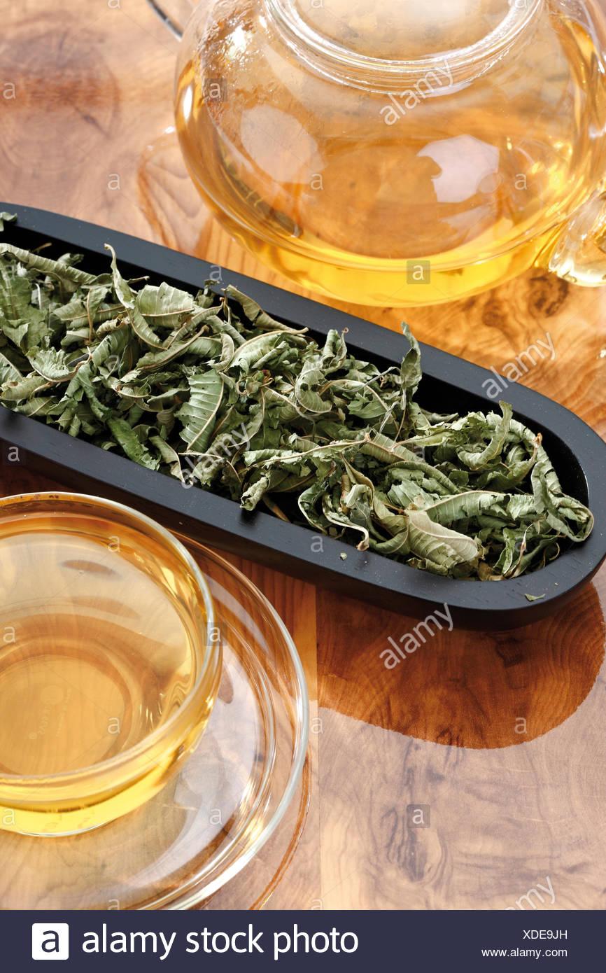 Verbena or Vervain tea (Verbena officinalis Stock Photo: 283671321