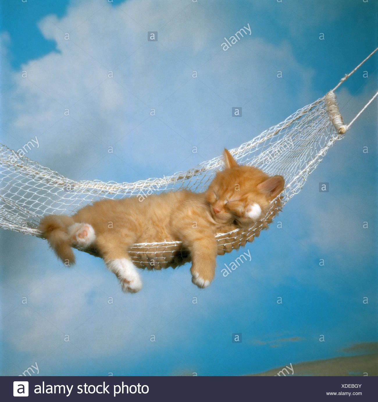 cat kitten - lying in hammock - Stock Image