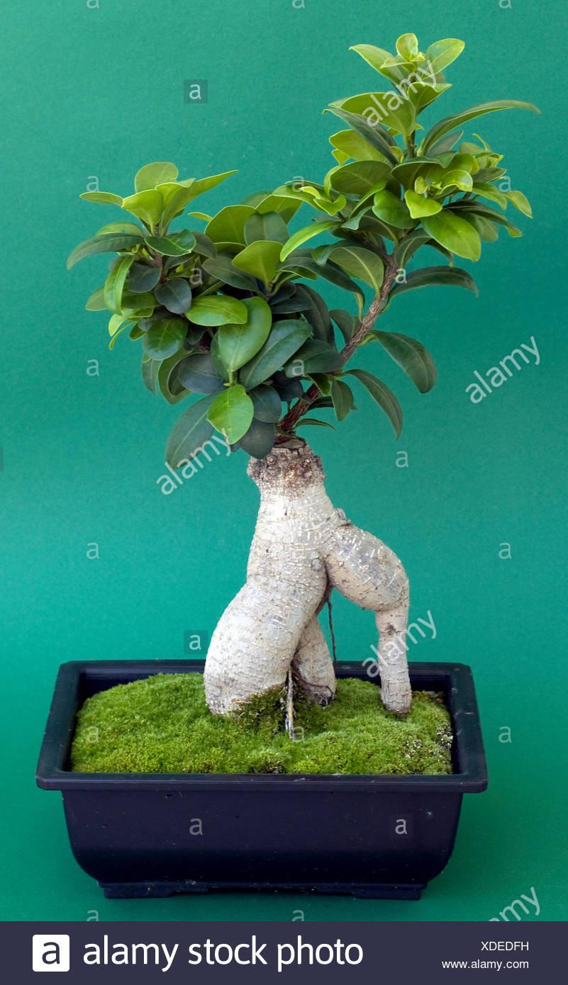 Bonsai Pot With Moss And Stock Photo Alamy