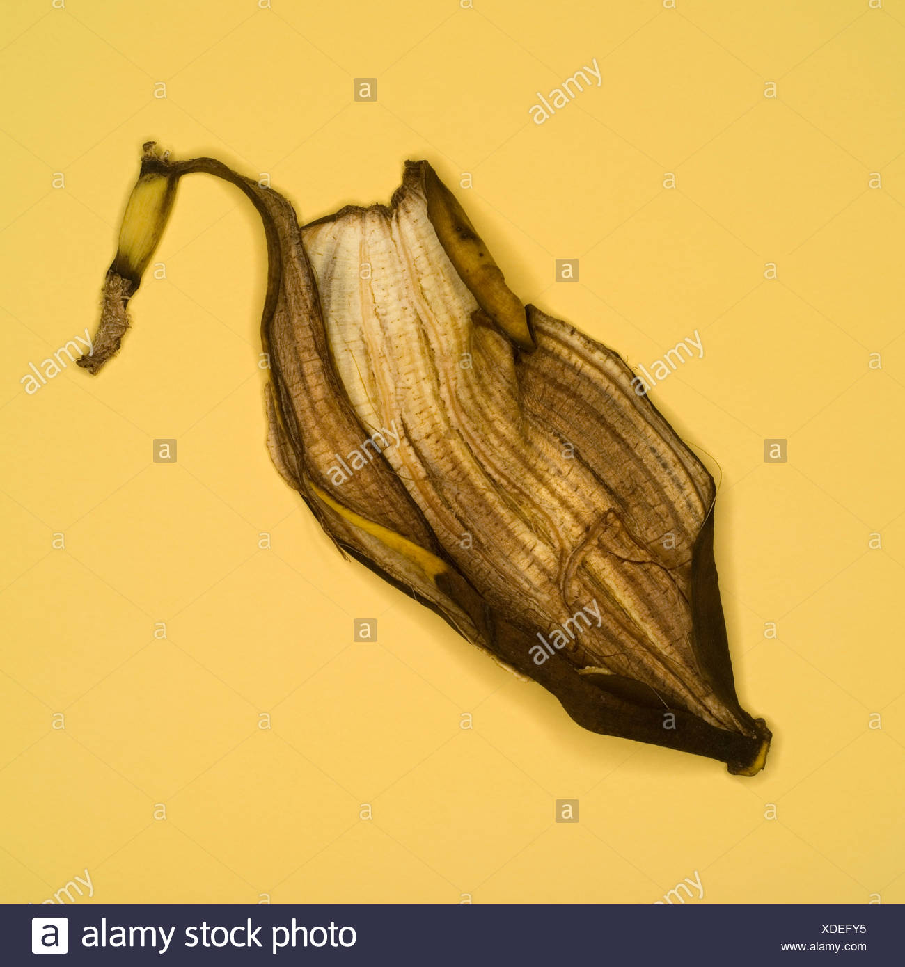 Rotting banana skin, elevated view - Stock Image