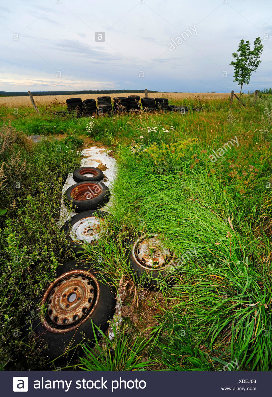 plastic sheet and old tires on silo in field landscape , Germany, Hesse - Stock Image