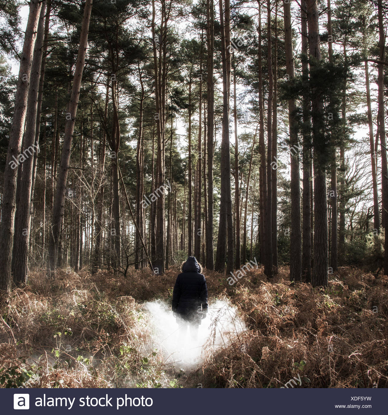 Rear view of man standing in forest in fog - Stock Image