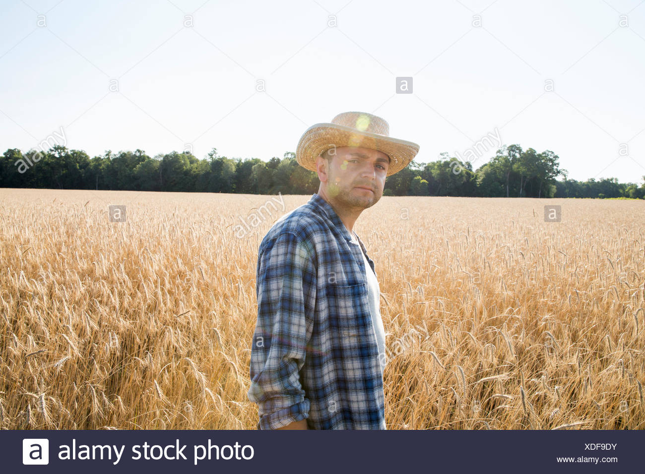 Man wearing a checkered shirt and a hat standing in a cornfield, a farmer. - Stock Image