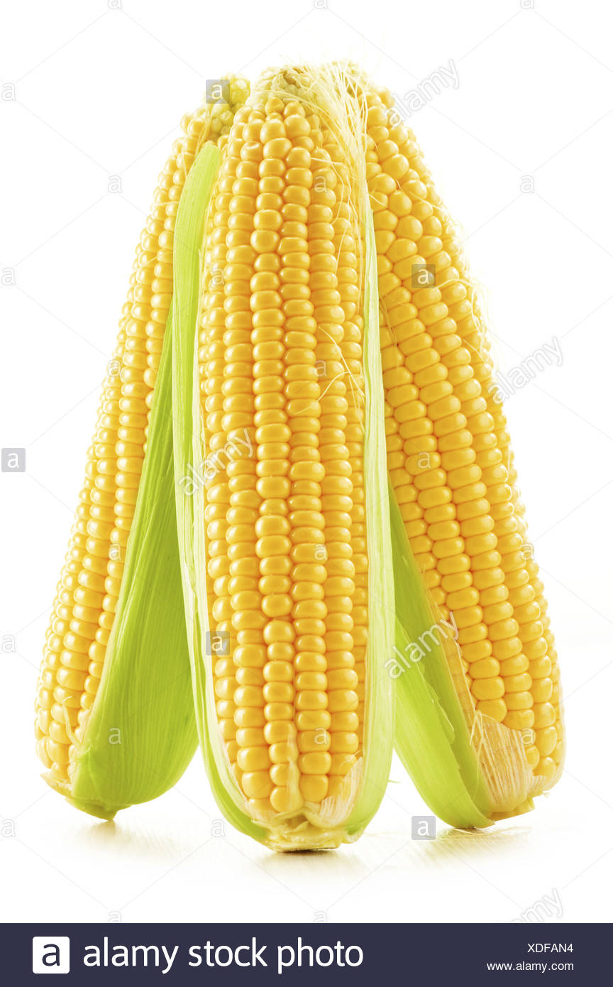 Ears of corn isolated on a white background. - Stock Image