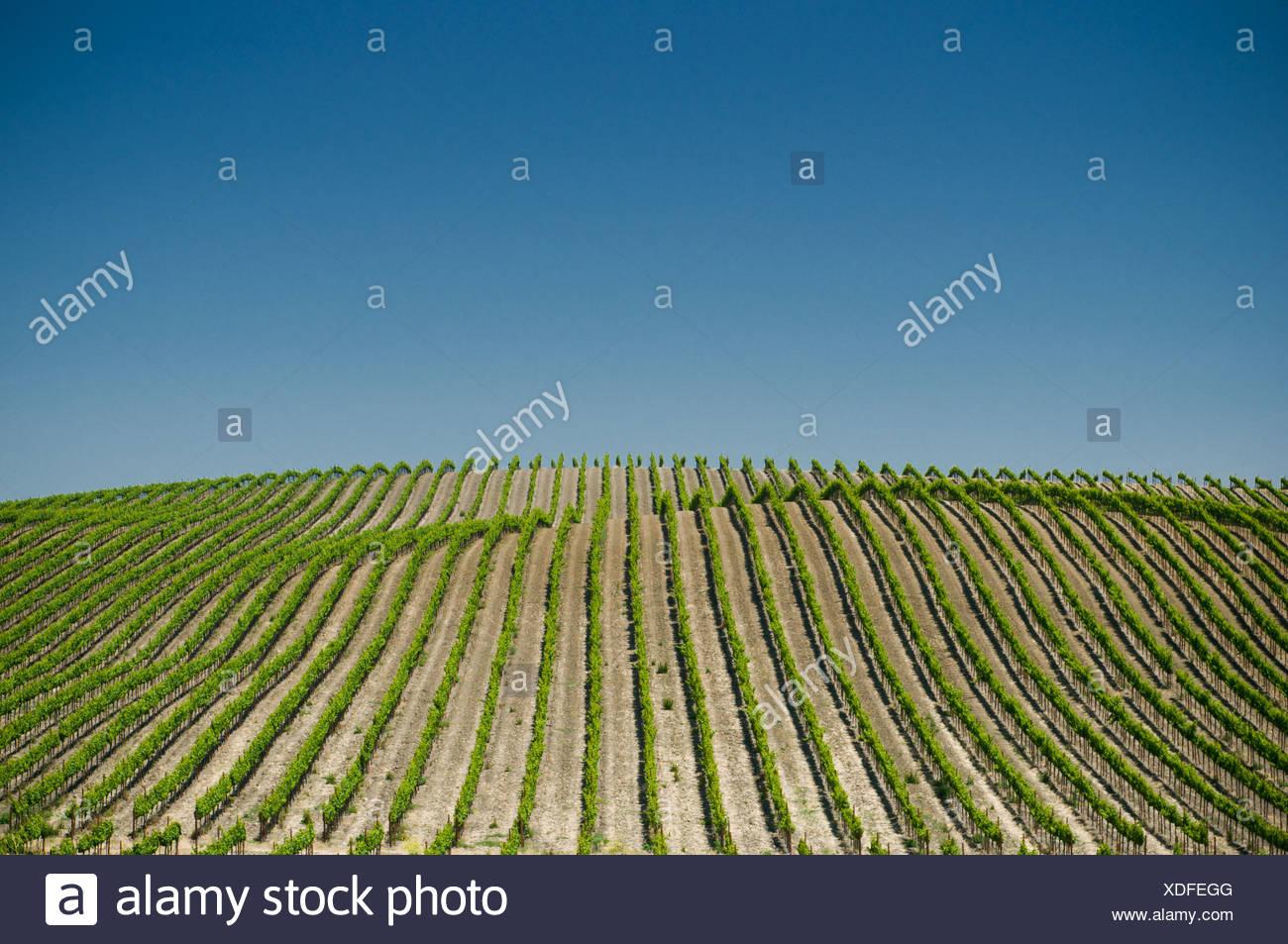 Sonoma Valley Vineyards Stock Photos Amp Sonoma Valley