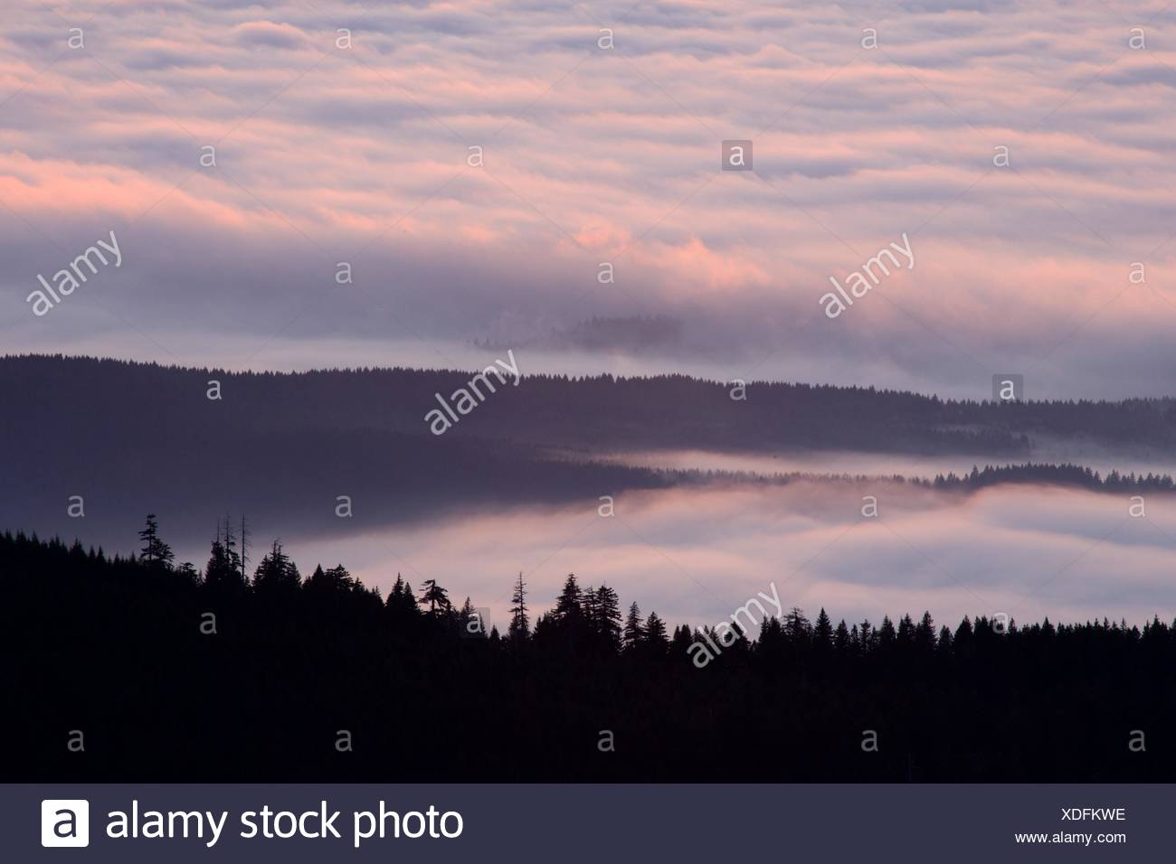 Willamette Valley fog from Marys Peak viewpoint, Marys Peak Scenic Botanical Area, Siuslaw National Forest, Oregon. - Stock Image
