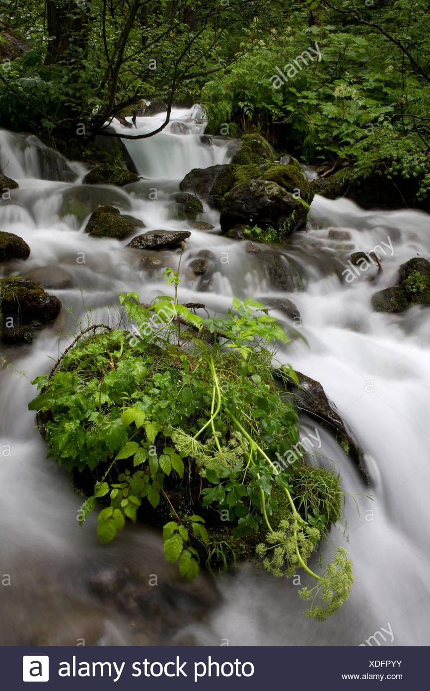 Rocks and plant life around Falls Creek in Alaska - Stock Image