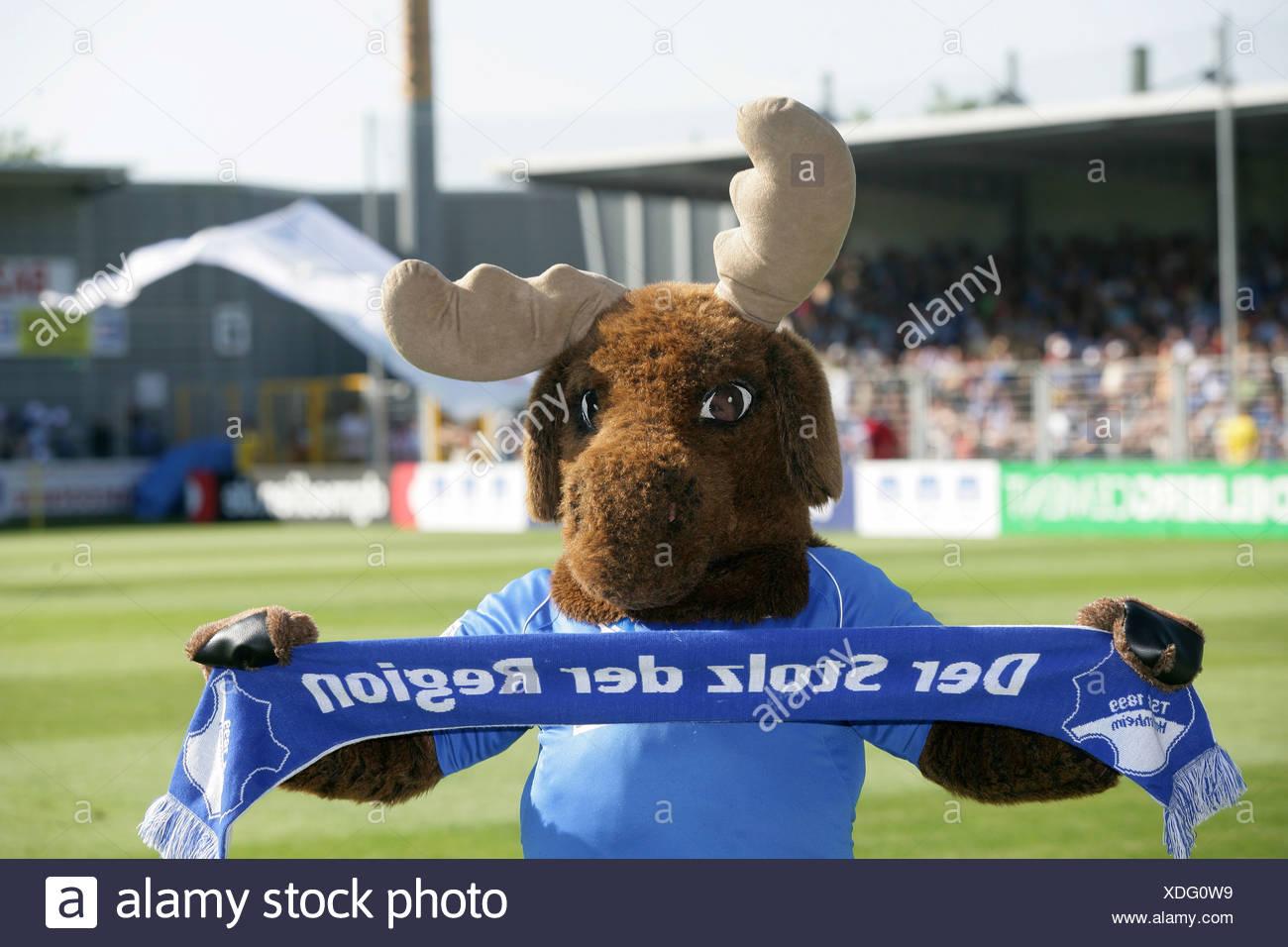 Mascot 'Hoffi' of Hoffenheim, football, Second German Football League, TSG Hoffenheim, TuS Koblenz, Dietmar-Hopp Stadium - Stock Image