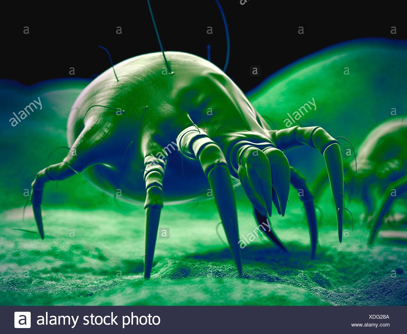 Dust mite, illustration. Stock Photo
