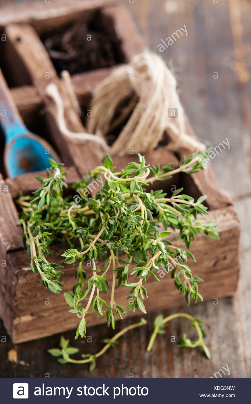 Bunch of fresh thyme in wooden box Stock Photo