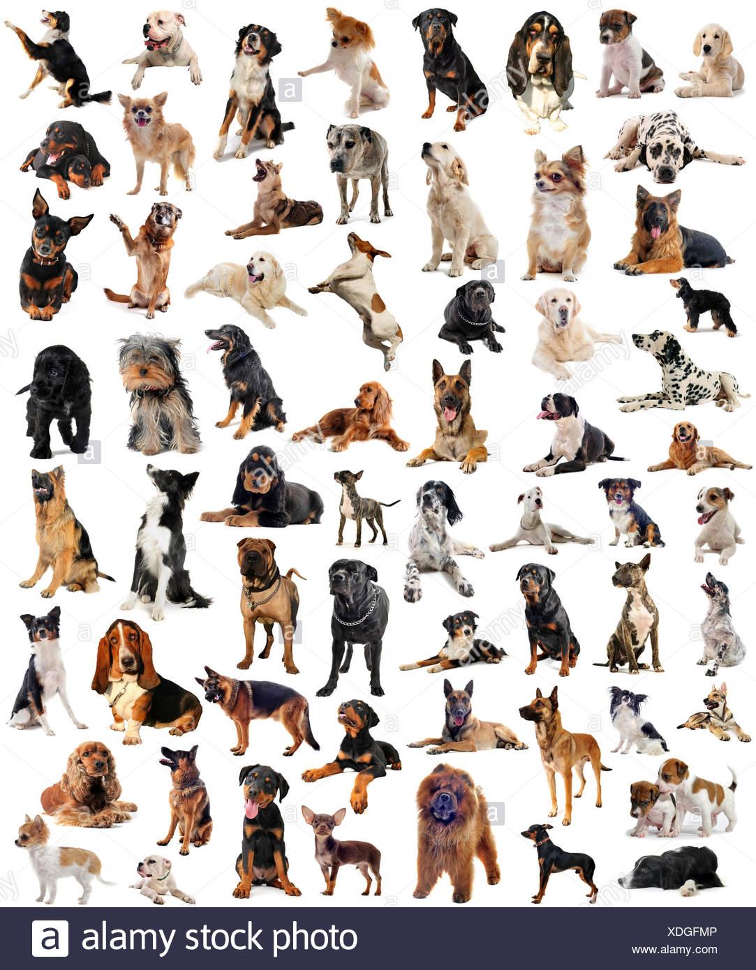 Dog Rottweiler Group Animal Pet Studio Dogs Puppy Wolf Dalmatian