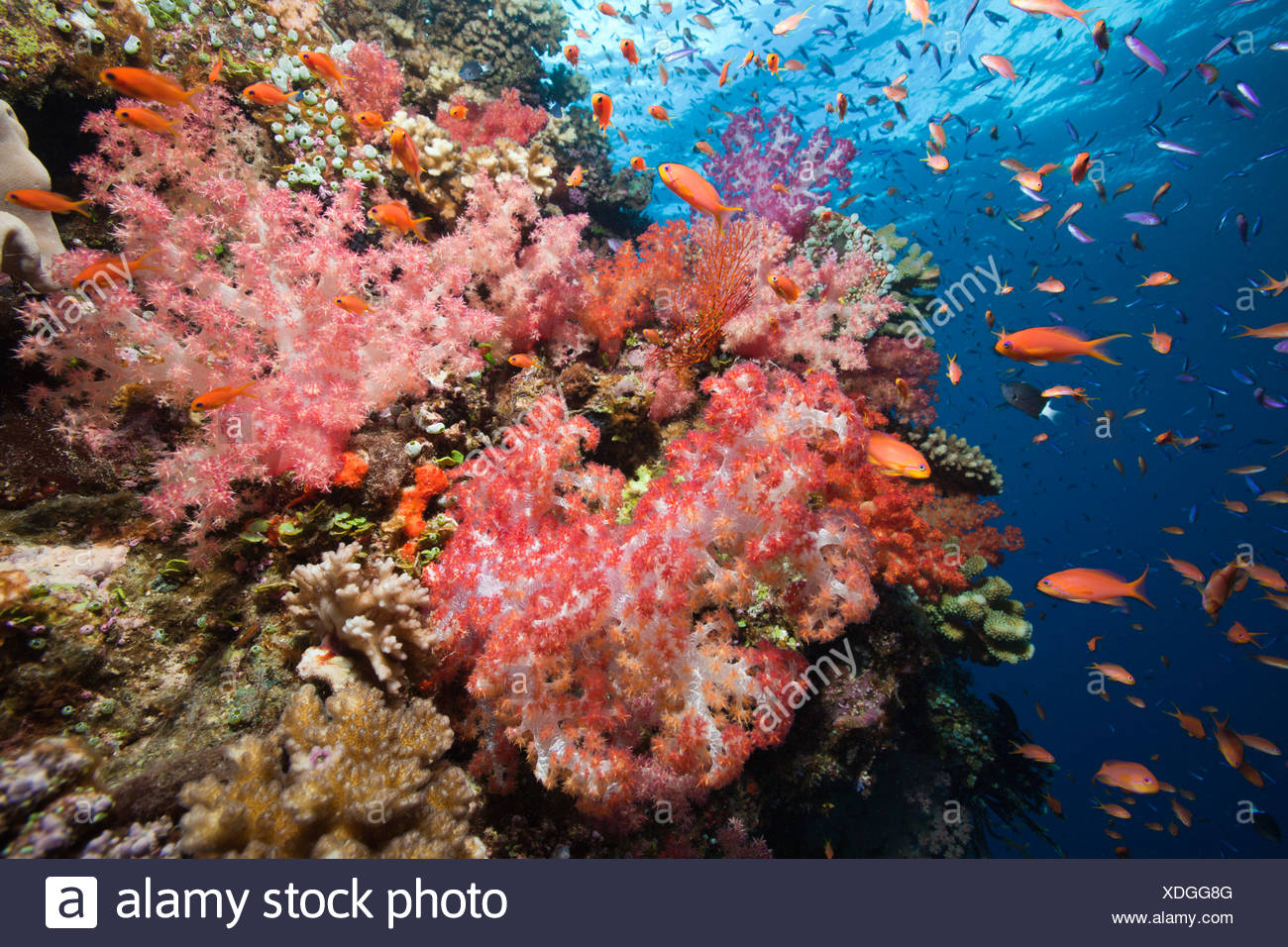 Coral Reef With Many Coloured Fish Stock Photos & Coral Reef With ...