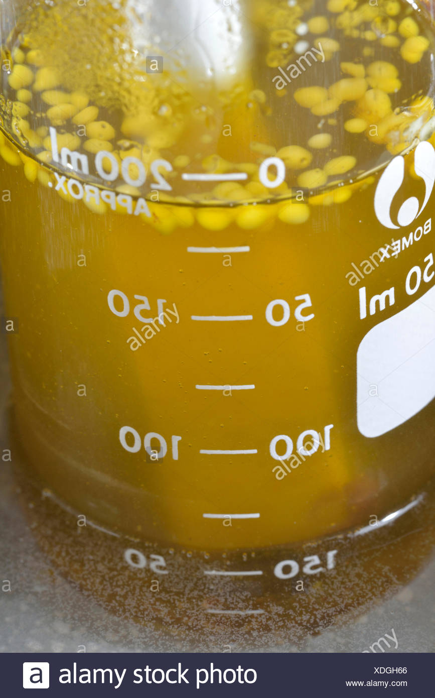Production spruce resin ointment, double boiler / (Picea abies) - Stock Image