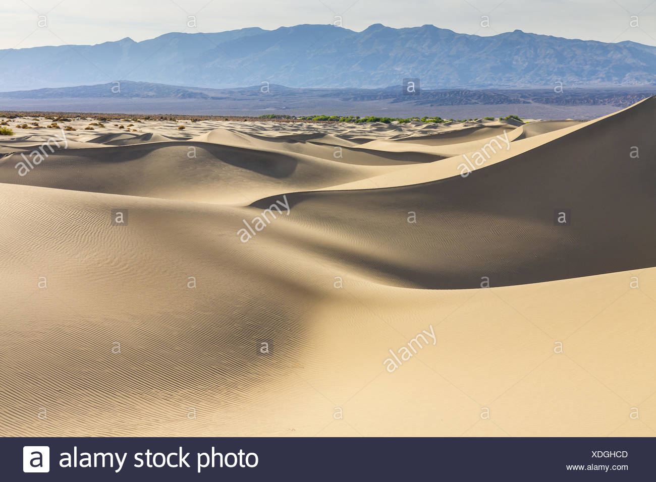 Mesquite Flat Sand Dunes, Death Valley National Park, California, USA, America. - Stock Image
