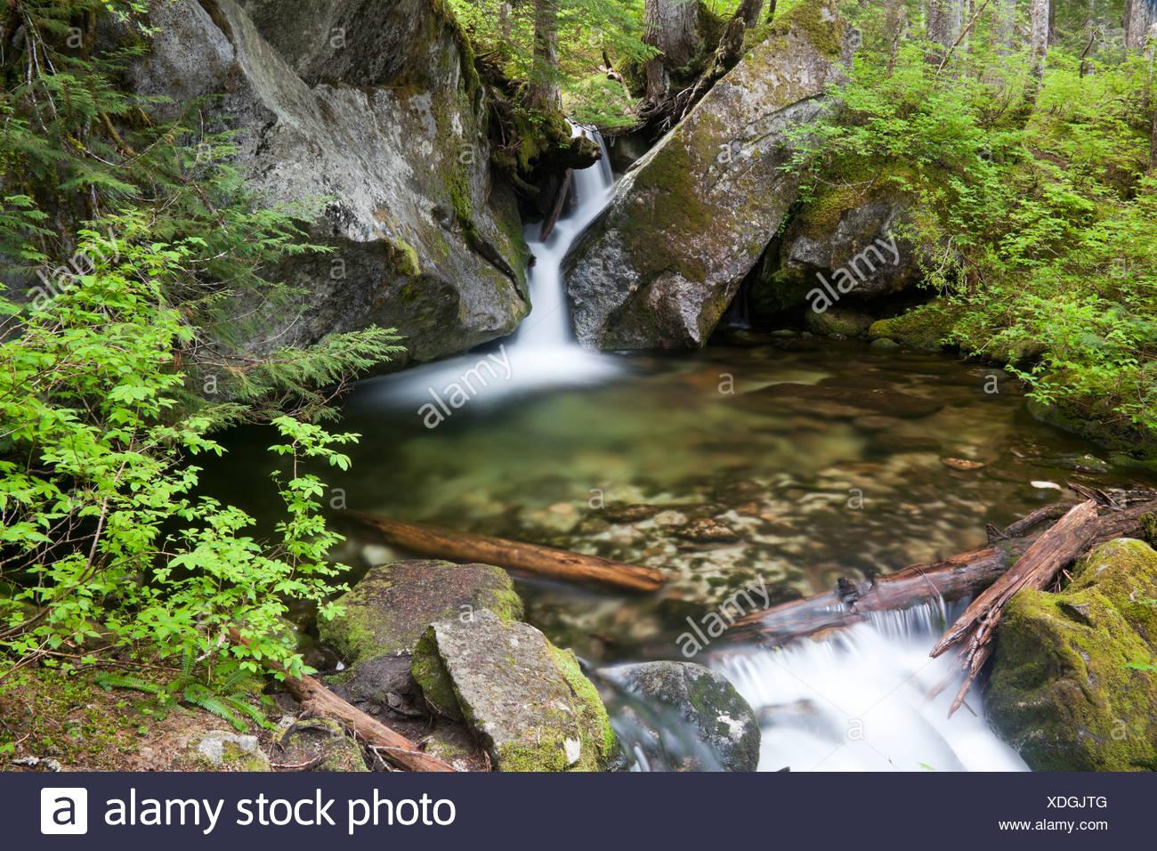 A rainforest stream cascades into a pool through granite rocks. - Stock Image