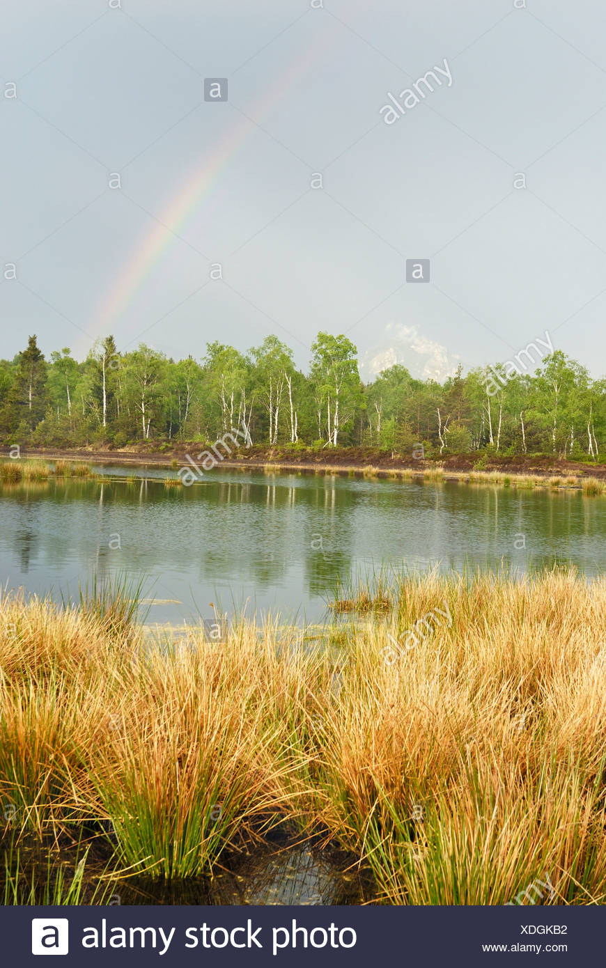 Passing thunderstorm with rainbows over a pond with Common Club-rush (Schoenoplectus lacustris) in the moors in spring with fre - Stock Image