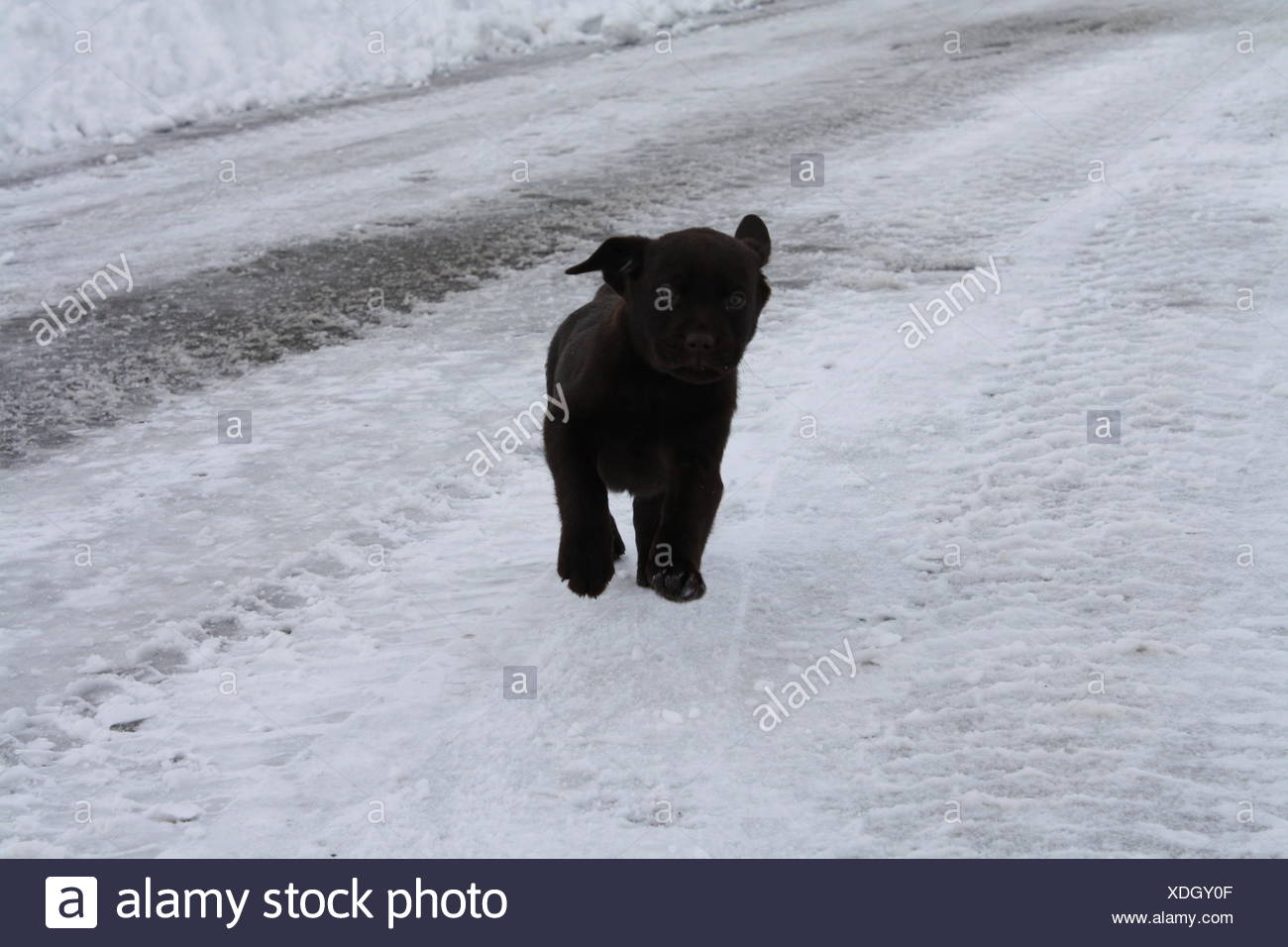 Active Cute Dog Running On A Rural Road Stock Photo 283728831 Alamy