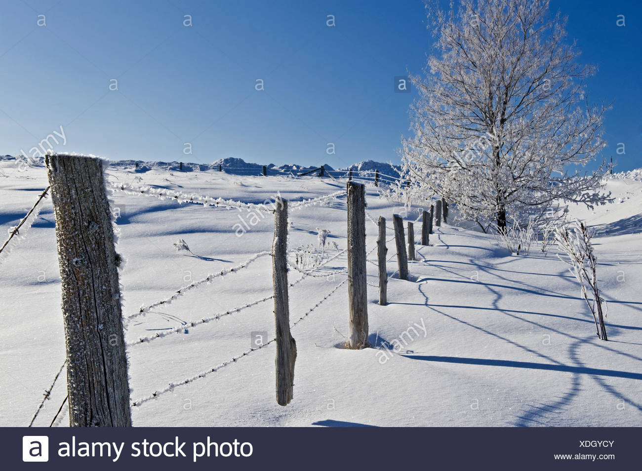 Fence and hoarfrost on tree, near Bourget, Ontario, Canada - Stock Image