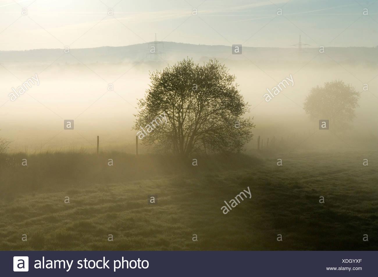 Early morning fog, Germany Stock Photo